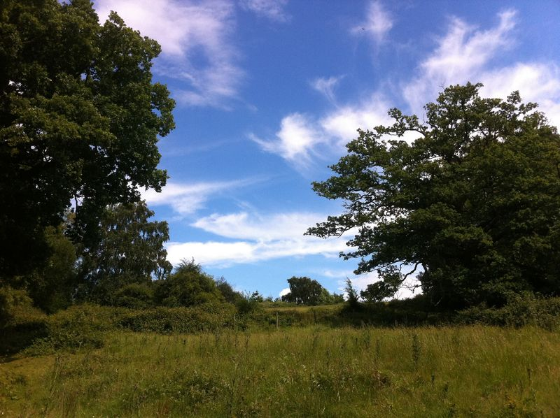 Epping-forest-london
